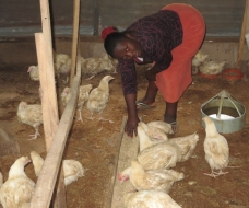 A beneficiary of Enterprising Women in her Poultry